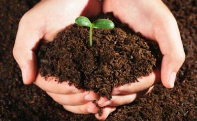 土壤检测机构讲解如何进行土壤检测