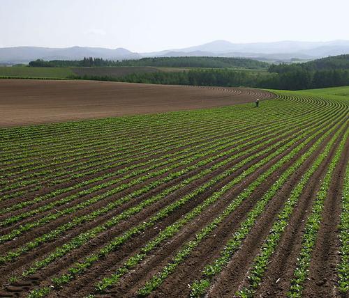 土壤和沉积物监测